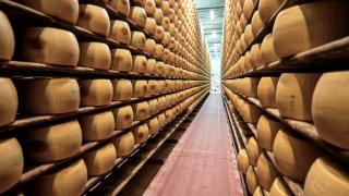 Как делают Пармезан — репортаж с сыроварни