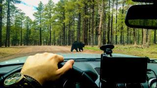 Путешествие по США на автомобиле. День 9 - Беаризона и Гранд Каньон