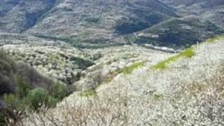 Долина Херте в ожидании Праздника цветущей черешни