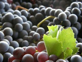 Культура и производство вина в Ла Риохе