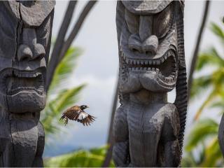 Гавайи. Почему аборигены не съели Кука и не только об этом...