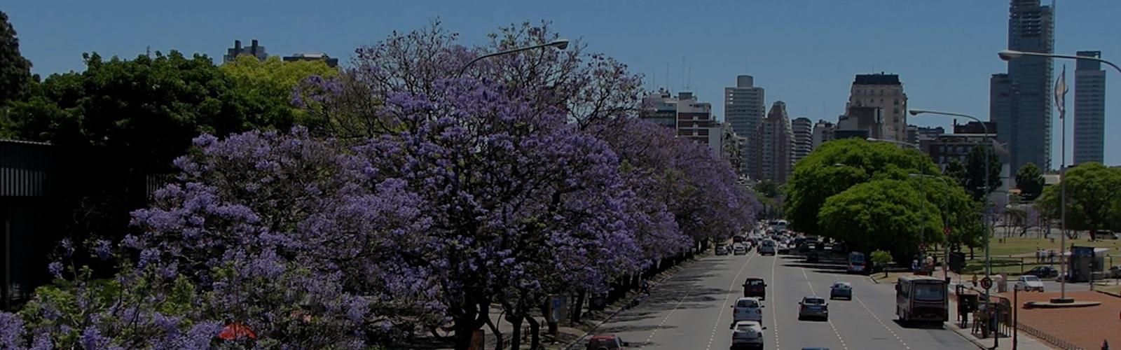 Аргентина. Легенда о фиалковом дереве
